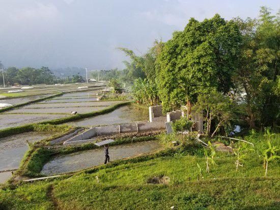 Rice Paddy Fields - Tour of Mai Chau